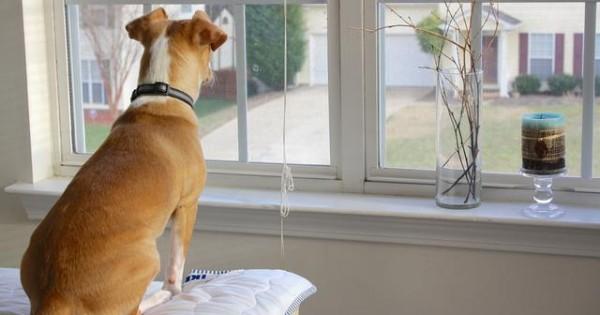 Όταν ο σκύλος σας περιμένει να γυρίσετε σπίτι. Ένα υπέροχο βίντεο!