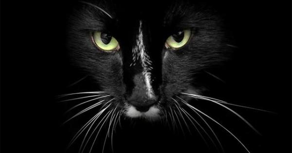 Γιατί οι γάτες έχουν μουστάκια;