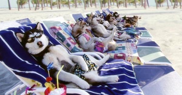 Όταν οι σκύλοι πάνε διακοπές (εικόνες)