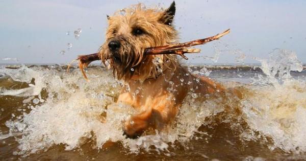 Προσοχή! Το θαλασσινό νερό μπορεί να βλάψει το σκύλο μας
