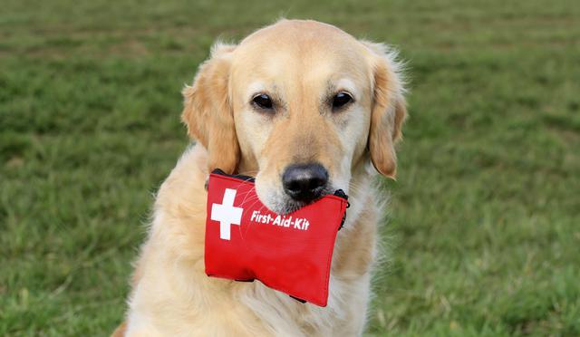 Σκύλος Πρώτες βοήθειες κουτί πρώτων βοηθειών