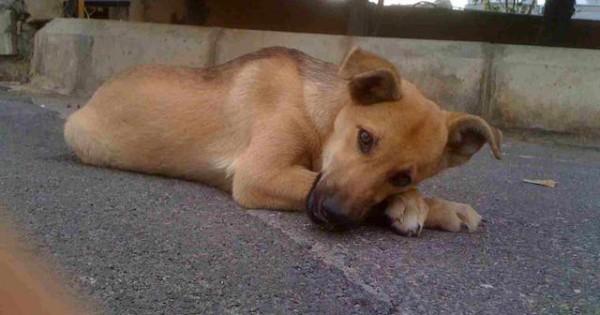 Βίντεο που εξοργίζει: Ανδρας καταβρέχει με χλωρίνη τον σκύλο την ώρα που κοιμάται!