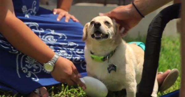 Δείτε την συγκινητική ιστορία ενός παραπληγικού σκύλου, που η ζωή του άλλαξε ξαφνικά! (βιντεο)