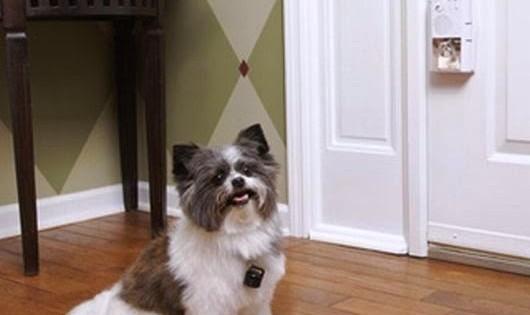 Όταν χτυπάει το κουδούνι o σκύλος μου οργιάζει! Τι να κάνω;