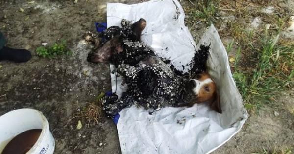 Σοκαριστικές φώτο: Άφησε την σκυλίτσα του βουτηγμένη στην πίσσα για δύο ημέρες!