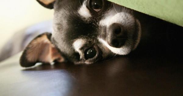 Όταν οι κρότοι και τα μπουμπουνητά προκαλούν πανικό στο σκύλο μας