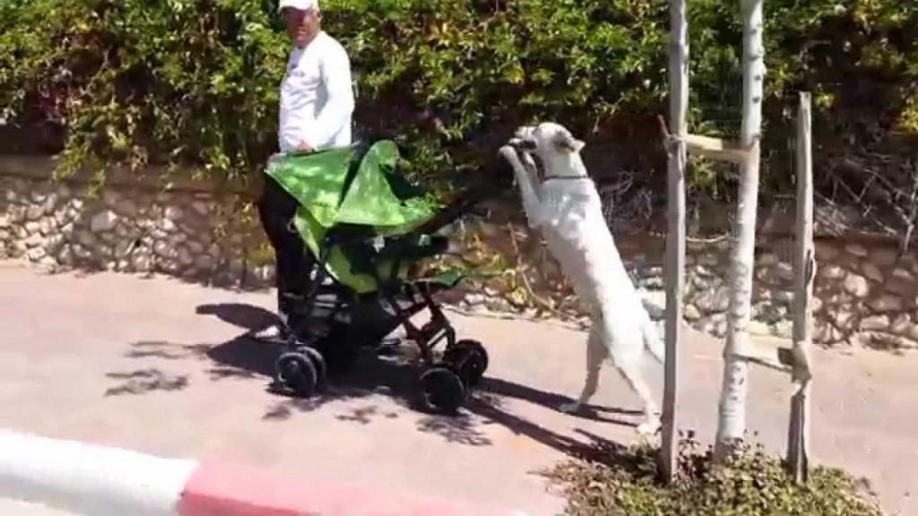 Σκύλος μωρό καροτσάκι βόλτα