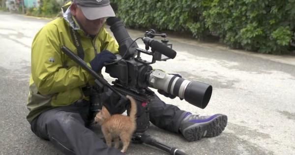 Γατάκι τον πλησιάζει αργά αργά. Αυτό που γίνεται; Θα χαμογελάσετε! (Βίντεο)