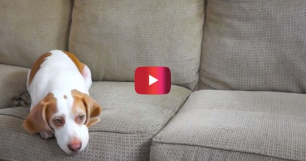 Απίστευτο: δείτε την έκπληξη του σκύλου όταν κατάλαβε ότι θυμήθηκαν τα… γενέθλιά του! (Βίντεο)