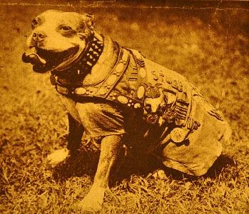 Ο τετράποδος Λοχίας που έσωσε τη ζωή δεκάδων στρατιωτών και αιχμαλώτισε έναν Γερμανό στρατιώτη, στον Α΄ Παγκόσμιο Πόλεμο…  (Εικόνες)
