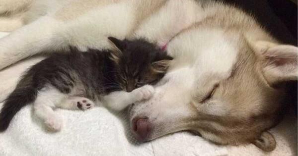 Βρήκαν αυτή την γάτα στα πρόθυρα του θανάτου. Αυτή η φιλία που θα δείτε όμως της έσωσε τη ζωή. (Εικόνες)