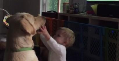 Ο σκύλος αρνείται να παίξει με το μωρό (Βίντεο)