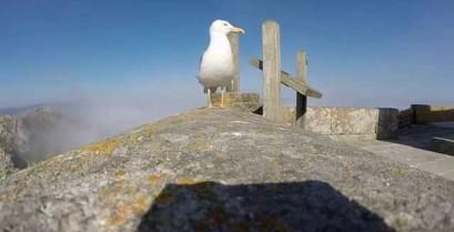 Γλάρος κλέβει την κάμερα τουριστών (Βίντεο)