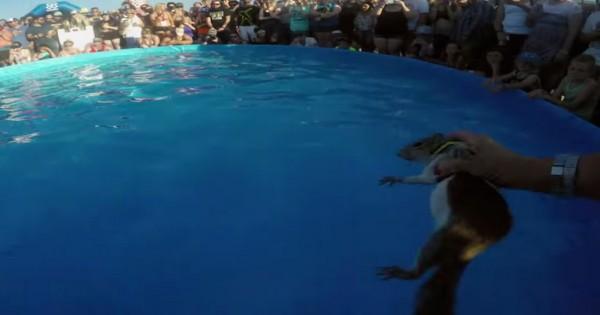 Έβαλαν τον σκίουρο στην πισίνα… Μόλις ανεβεί πάνω στο σκι θαλάσσης; Θα τρελαθείτε! (Βίντεο)