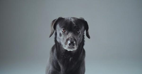 Μάθε πως μπορείς να κάνεις έναν αδέσποτο σκύλο χαρούμενο (Βίντεο)