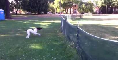Η άψογη τούμπα του σκύλου (Βίντεο)