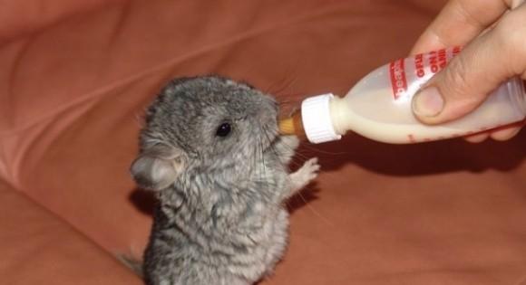 Δείτε απίθανα ζώα που δεν τα έχετε ξαναδεί ως μωρά! (Εικόνες)