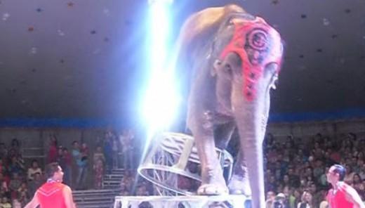 Ελέφαντες τρέχουν να βοηθήσουν ελέφαντα που έπεσε σε τσίρκο (Βίντεο)