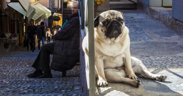 Σκυλιά γίγαντες ή άνθρωποι νάνοι; [photos]