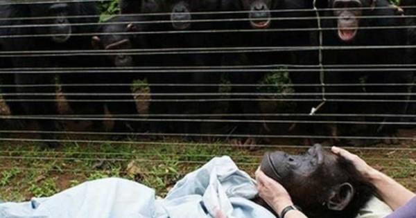 Συγκλονιστικές στιγμές με ζώα που πενθούν τον θάνατο των αγαπημένων τους (Βίντεο)