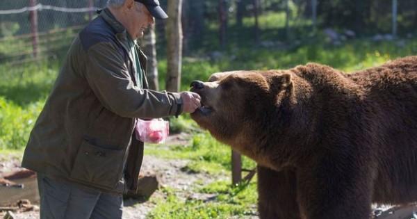Γνωρίστε τον άνθρωπο που κοιμάται με αρκούδες και τις ταΐζει με το… στόμα! (video)