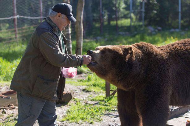 αρκούδες