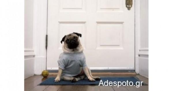 Αν ο σκύλος γαυγίζει όταν χτυπά το κουδούνι! (Βίντεο)