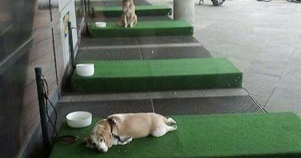 Το ΙΚΕΑ Έφτιαξε Χώρους Για Να Μην Αφήνουν Οι Πελάτες Τον Σκύλο Τους Στο Αυτοκίνητο (Βίντεο)