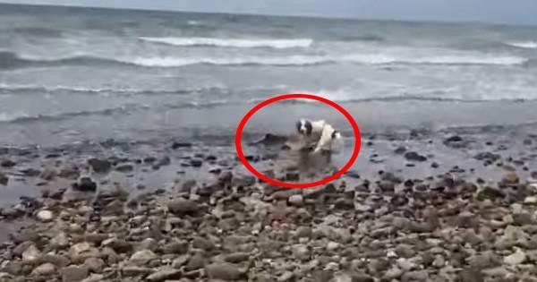 Σκύλος έσωσε… δελφίνι που ξεψυχούσε σε παραλία! (video)
