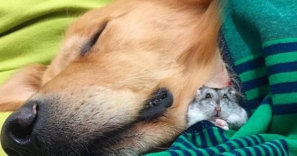 Φωτογραφίες για να «λιώσεις»: Μια αληθινή φιλία σκύλου με χάμστερ και παπαγαλάκια! [photos]