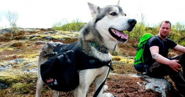 Πρόσεξε την άσκηση του σκύλου σου τις ζεστές ημέρες. Τι πρέπει και τι δεν πρέπει να κάνεις