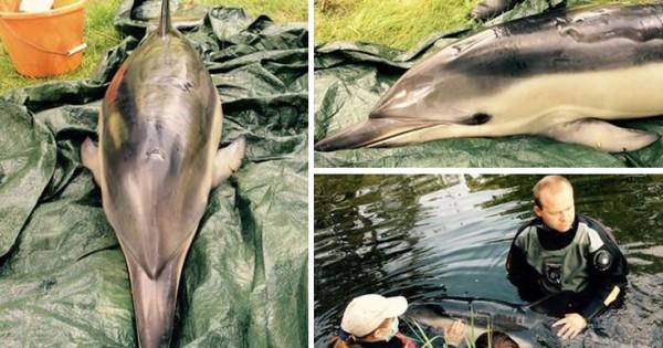Ευθανασία σε δελφίνι που έπαθε ηλιακό έγκαυμα (Εικόνες)