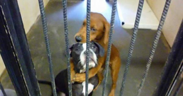 Σκύλος σε καταφύγιο ζώων σώζει τον φίλο του από την ευθανασία με μια αγκαλιά! (Εικόνες)