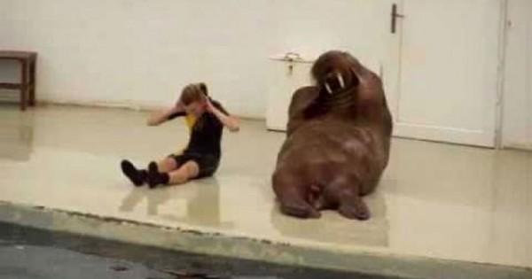 Το ξεκαρδιστικό μάθημα γυμναστικής ενός θαλάσσιου ίππου (Video)