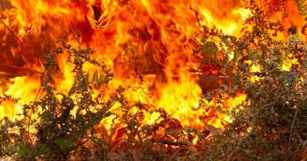 Πού πρέπει να τηλεφωνήσετε εάν βρείτε τραυματισμένα ζώα από πυρκαγιά