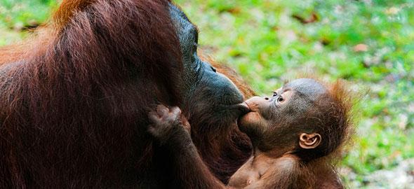Οι συγκινητικότερες φωτογραφίες μαμάδων με μωρά στο ζωικό βασίλειο! (Εικόνες)