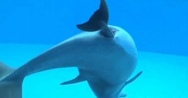 Μοναδικό! Δελφίνι γεννά μπροστά στην κάμερα