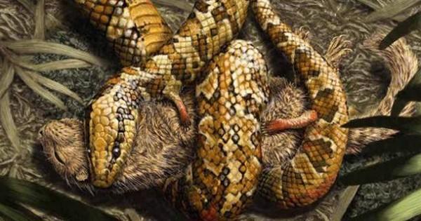 Ανακαλύφθηκε το πρώτο φίδι με τέσσερα πόδια [εικόνες]