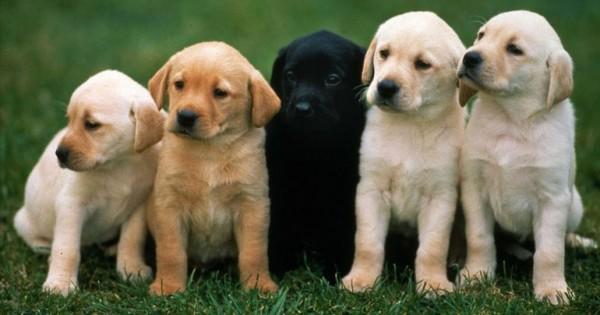 Οι σκύλοι αντιπαθούν όσους συμπεριφέρονται άσχημα στο αφεντικό τους