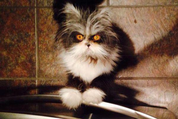c70bff851348 Η γατα με το βλεμμα που στοιχιωνει τα ονειρα σου!! (20 φωτογραφιες ...