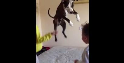 Ένας σκύλος θέλει να παίξει όπως τα παιδιά (Βίντεο)