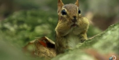 Ποτέ μην πειράζεις τα βελανίδια ενός σκίουρου (Βίντεο)
