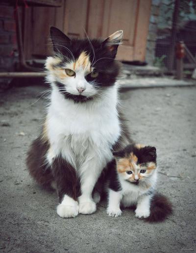 μαμάδες
