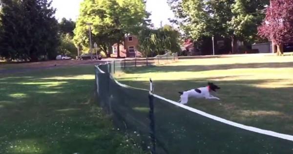 Δείτε την φοβερή τούμπα που κάνει αυτό το σκυλί. Δεν υπολογίζει τίποτα! (Βίντεο)