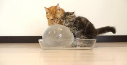 10 γάτες και μια μπάλα από πάγο (Βίντεο)