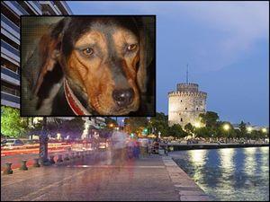 Ένας σκύλος… γνωρίζει τη Θεσ/νίκη στους τουρίστες!