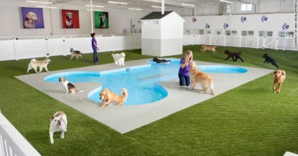 Αεροδρόμιο με πισίνα και spa για κατοικίδια [photos]
