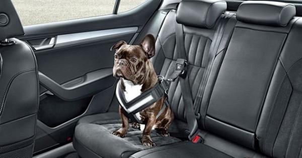 Η Skoda λανσάρει ζώνη ασφαλείας για σκυλιά (Εικόνες)