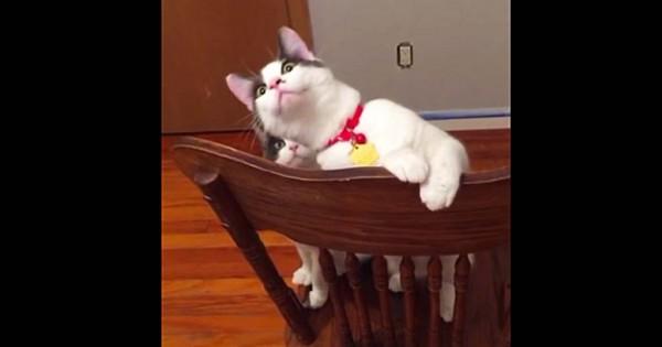Αυτές οι γάτες βλέπουν για πρώτη φορά ανεμιστήρα οροφής να γυρίζει. Δείτε την εκπληκτική αντίδρασή τους. (Βίντεο)