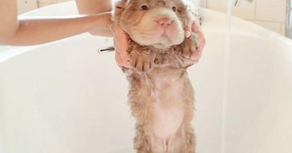 Ο σκύλος που κανείς δεν μπορεί να του αντισταθεί (Εικόνες)